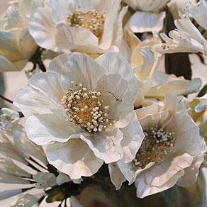 Květiny celulózové