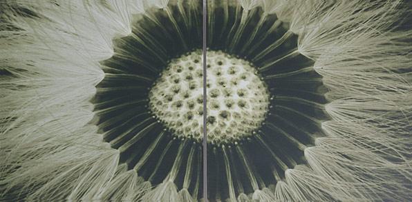obraz 2 ks 40x40cm - laminované plátno | A05092