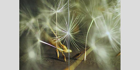 obraz 2 ks 70x50cm - laminované plátno | A07057