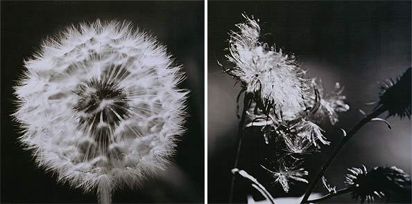 obraz 2 ks 40x40cm - laminované plátno | A02261