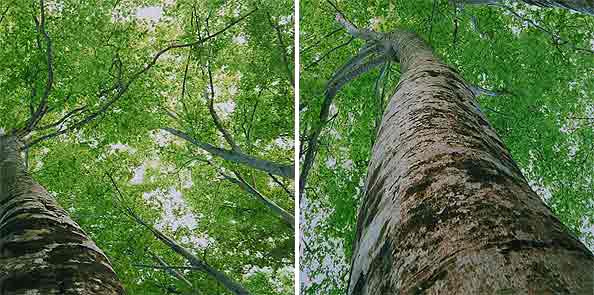 obraz 2 ks 50x50cm - laminované plátno | A02262