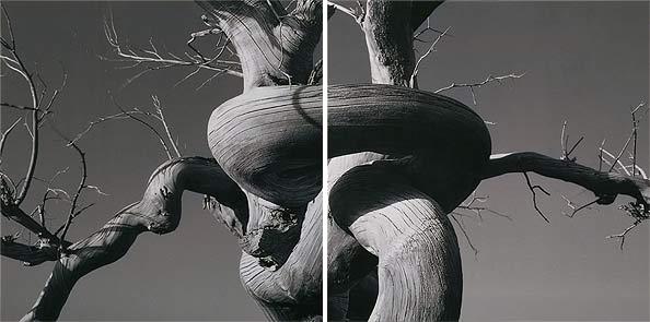 obraz 2 ks 50x50cm - laminované plátno | A02263