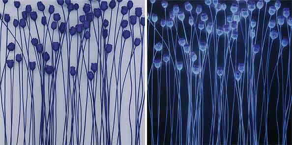 obraz 2 ks 60x60cm - laminované plátno | A02272