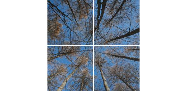 obraz 4 ks 50x50cm - laminované plátno | A05024