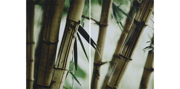 obraz 2 ks 35x50cm - laminované plátno | A05162